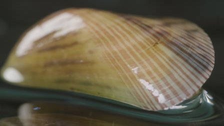 觀賞薄殼。第 1 季第 18 集。